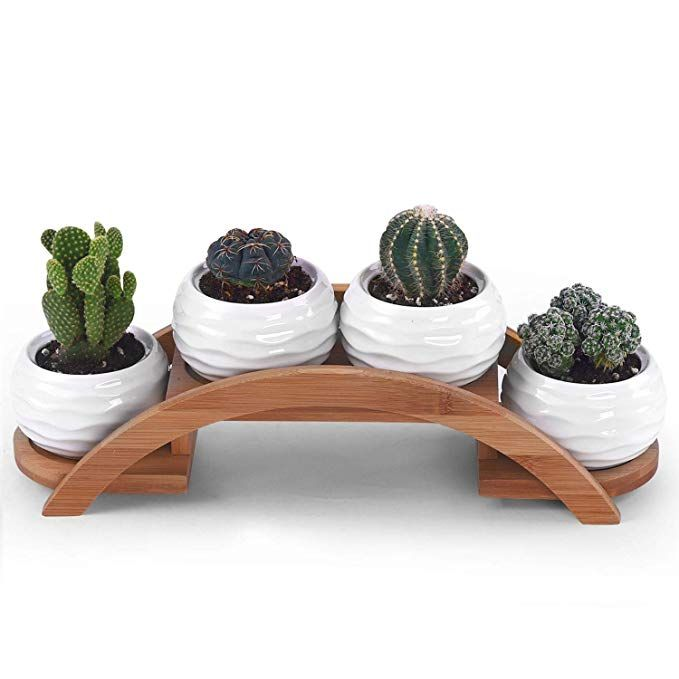 Amazon Com One Goods Ceramic White Mini Textured Succulent Plant Pot Cactus Plant Pot With Bamboo Arched T Cactus Plant Pots Planting Succulents Potted Plants