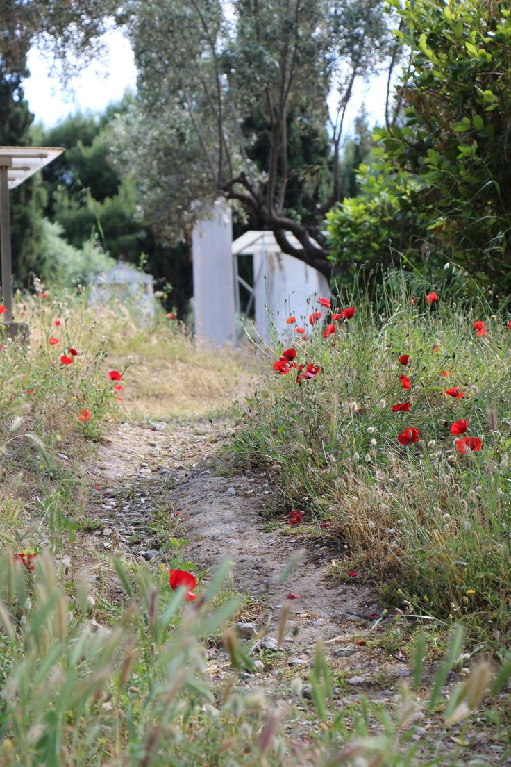 Kerameikos cemetery - poppies grow all over this site in #Athens #Greece #poppies