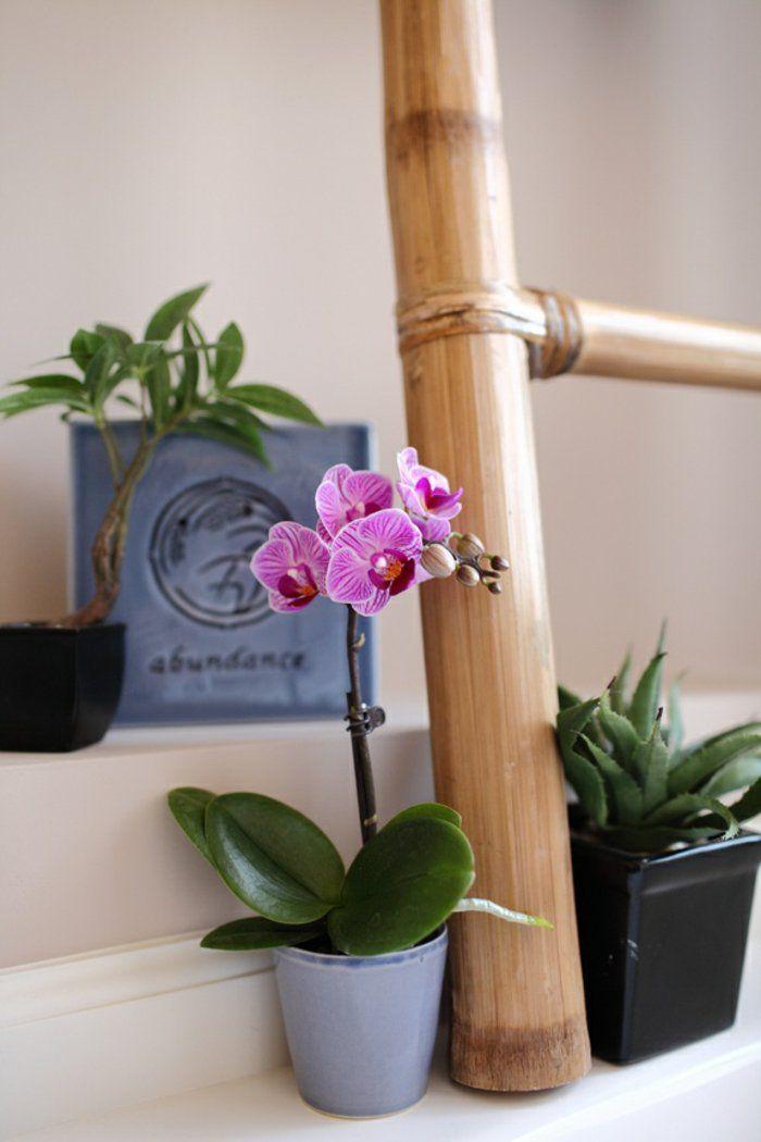 orchideen pflegen licht wasser wissenswertes