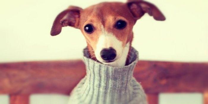 Recicla tu ropa convirtiéndola en prendas y accesorios para tu mascota