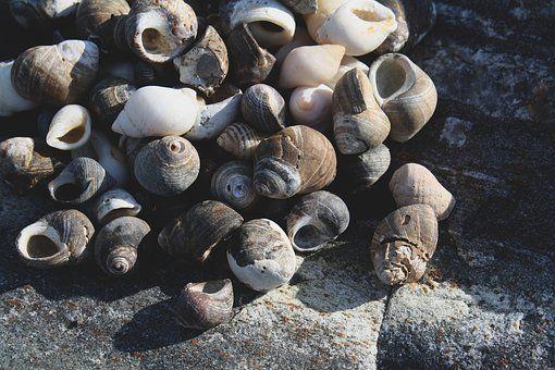 Océano, Piedra, Conchas De Mar