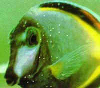 17 Best Images About Fish Disease On Pinterest Medicine