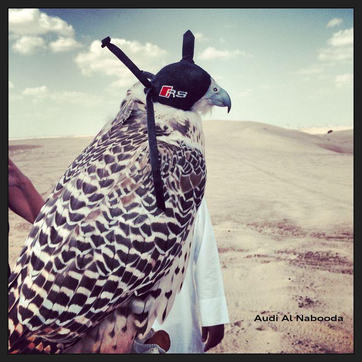 RS Falcon