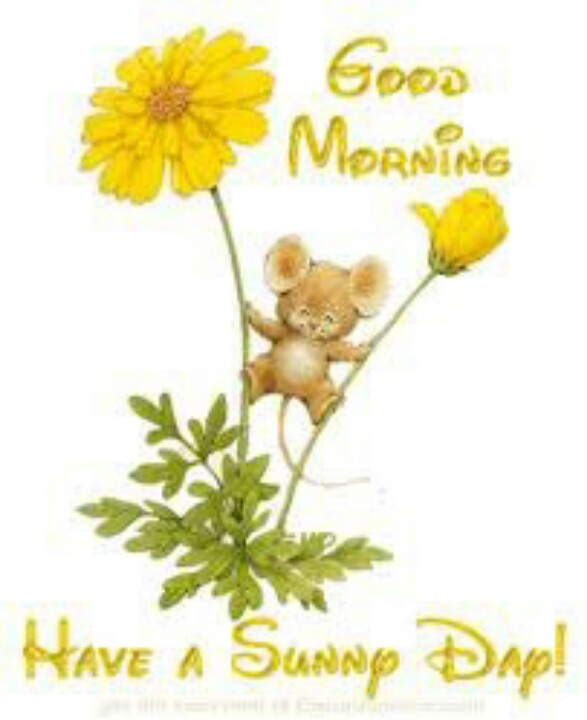 Good Morning Everyone Have A Good Day : Good morning everyone have a great day greetings