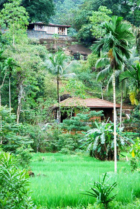 Die ECO Lodge liegt mitten im Regenwald