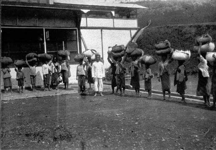 Para perempuan pemetik daun teh di Cigolek 1920  © Tropenmuseum