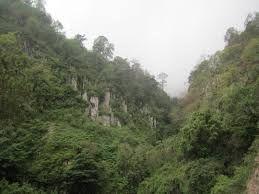 Mazatlan Rainforest