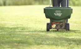 How and when to plant grass seeds