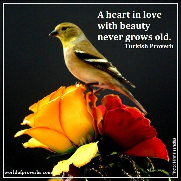 World of Proverbs - Famous Quotes: A heart in love with beauty never grows old. ~ Turkish Proverb [15217]