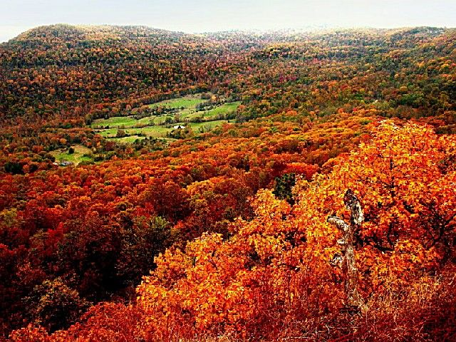 Ozark National Forest, an Arkansas National Forest located nearby Springdale