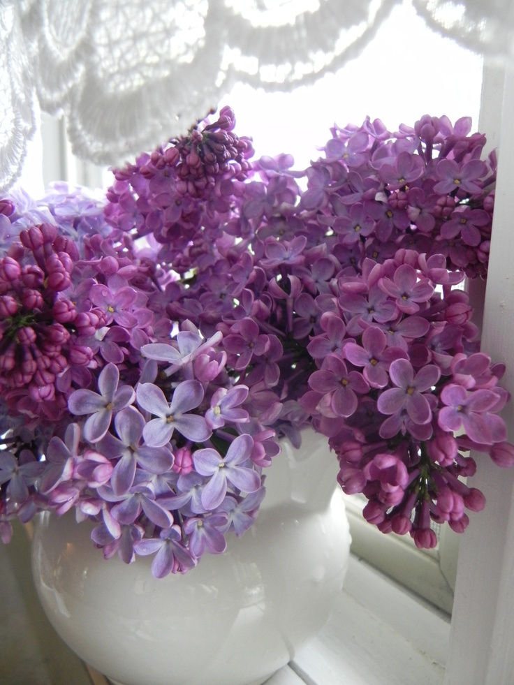 lilacs from my garden...