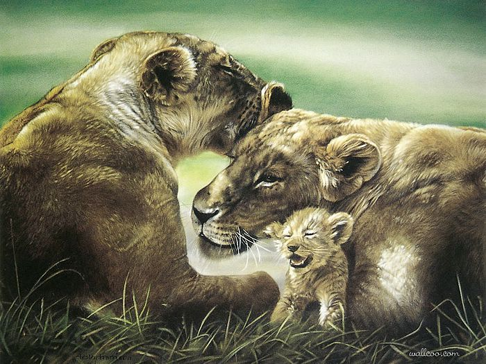 17 Best Ideas About Lion Family On Pinterest
