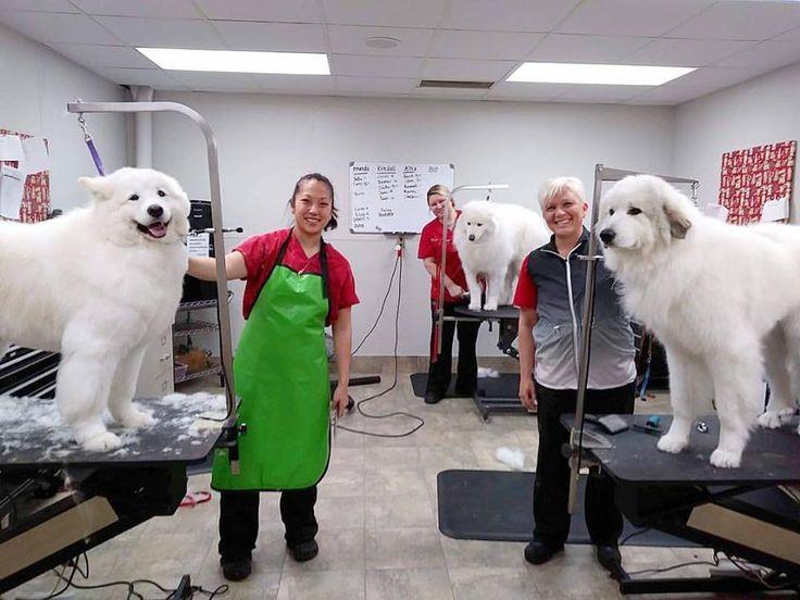 Red Dog Pet Resort Spa Cincinnati Oh