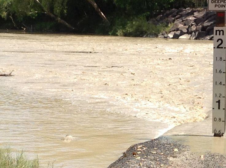 Spot the croc - Cahill's crossing #kakaduforme