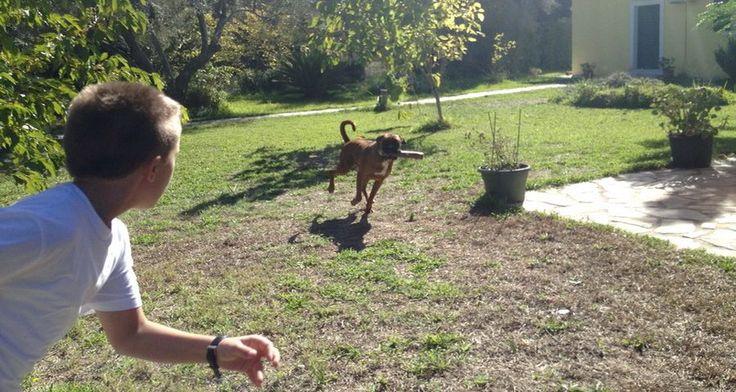 Σκύλος και παιδί – Τα παιδιά αγαπούν τα σκυλιά και το αντίστροφο! Ωστόσο, η πολύ στενή επαφή του σκύλου με το παιδί, μπορεί να οδηγήσει σε ...