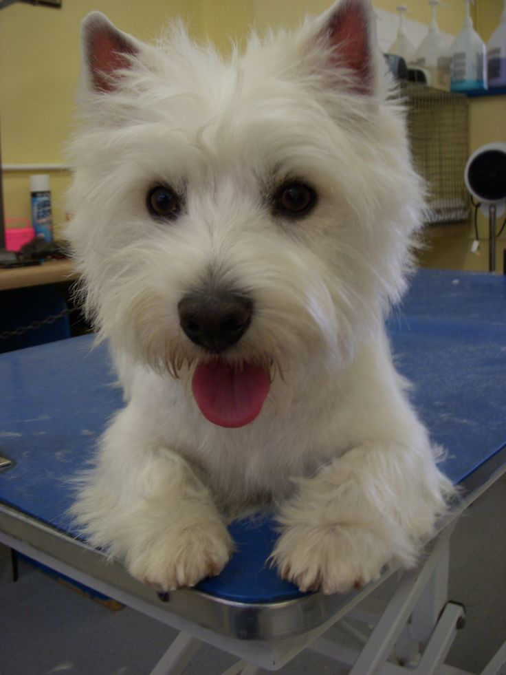 15 best dog grooming images on Pinterest | Dog treats, Pets and ...