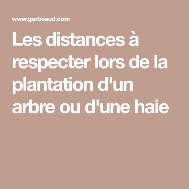Les distances à respecter lors de la plantation d'un arbre ou d'une haie