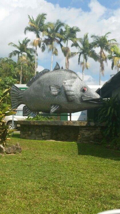 The Big Barramundi. Daintree North Queensland Australia... By *BB*