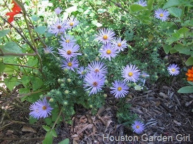 17 Best 1000 images about Houston Home Gardens on Pinterest Gardens