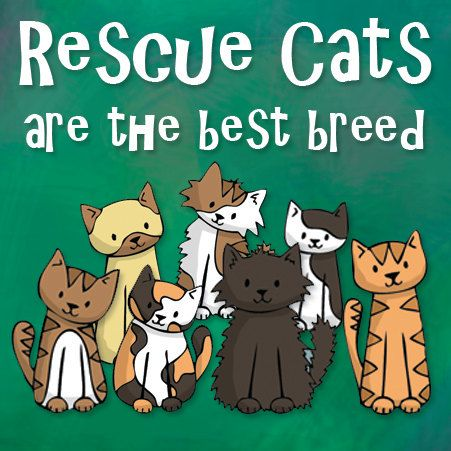 Rescue and Adopt from shelters!