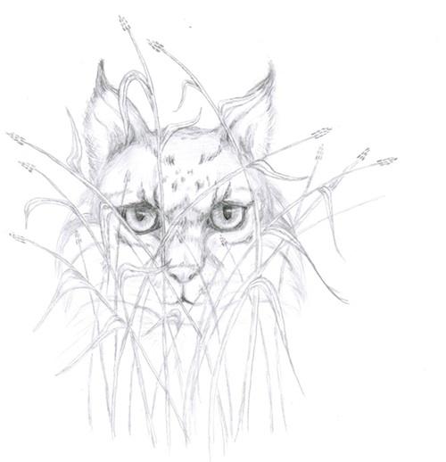 A Lyrix: Unusual wildcat with chameleon like