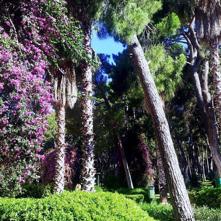 Magnificient garden @ Hotel Turquoise.