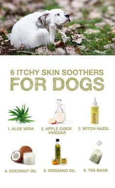 Does your pup struggle with itchy skin? Here are 6 natural skin soothers that ease the discomfort.  #TheHonestKitchen #Natural