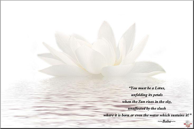 lotus quotes | Quotes of Bhagavan Sri Sathya Sai Baba