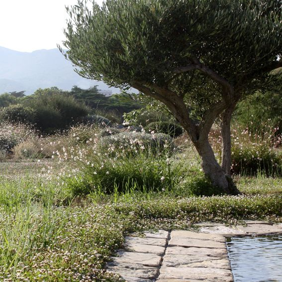 les 1836 meilleures images du tableau jardin outdoor sur pinterest jardin potager jardinage. Black Bedroom Furniture Sets. Home Design Ideas