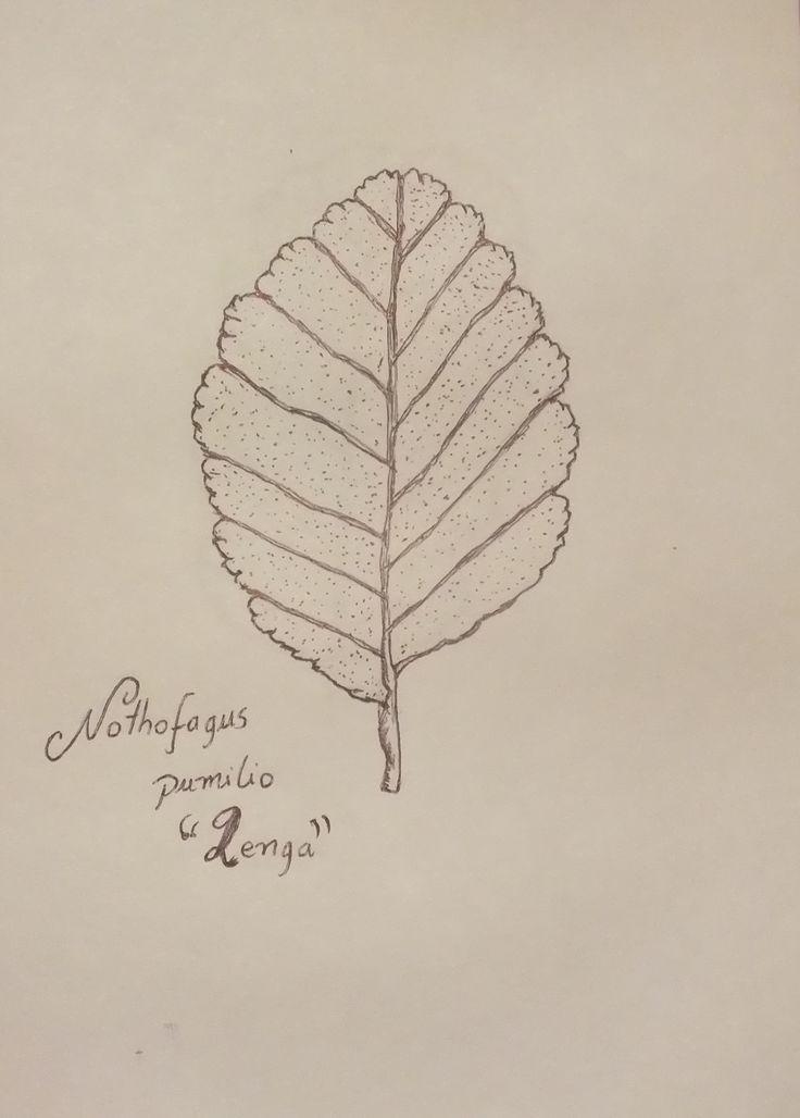 Nothofagus pumilio