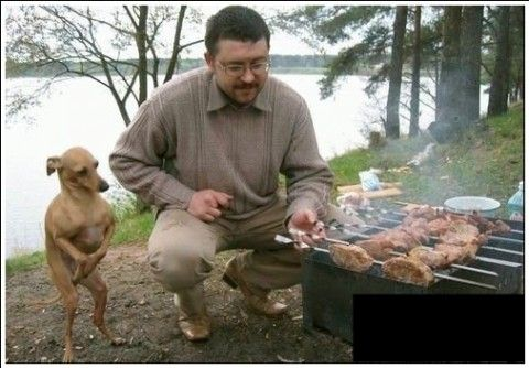 Look who's ready and hoping to eat.: Dobby, Dogs, Harrypotter, Funny Stuff, Funnies, Harry Potter, Humor, Animal