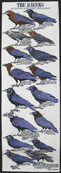 ravens, crows, Mockingbirds and the like. A very interesting poster for us fans of the Raven.