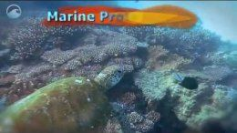 NOAA Ocean Today video: 'Marine Protected Areas'