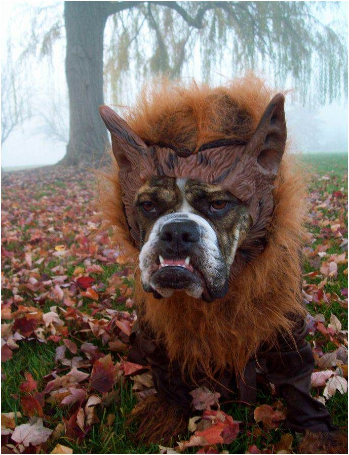 clever ideas for dog halloween costumes - Dogs With Halloween Costumes On
