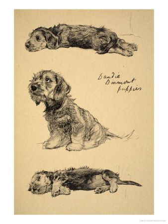 """Cecil Aldin """"Dandie"""" Most people do not know the Dandie Dinmot(sp?) But they are cute."""