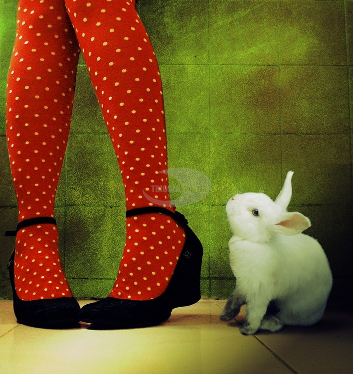 Two of my favourite things !! red and white spots and bunnies!!