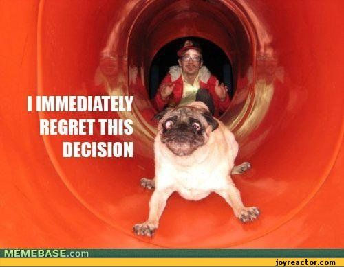 Funny+Pug+Puppy+Pictures   regret this decision / funny pictures slide photo dog pug / funny ...