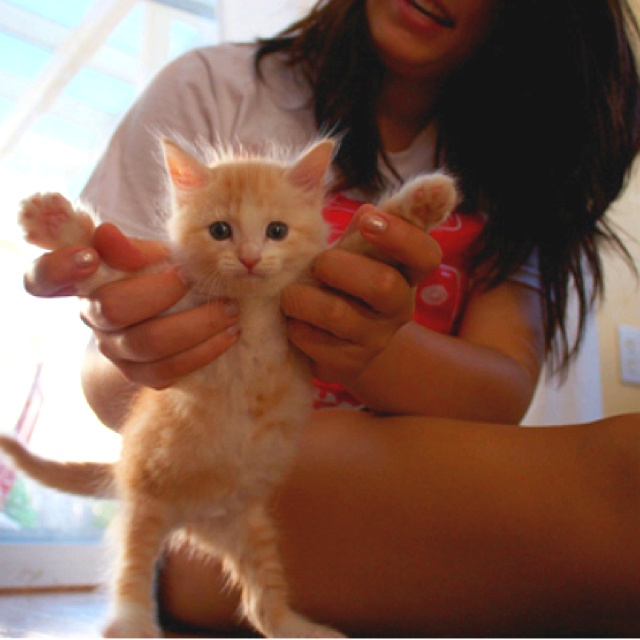 Dance kitty dance! ) (With images) Kitten adoption