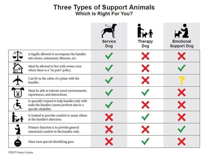 Click Here For A Downloadable Pdf Of This Graphic Service Dogs