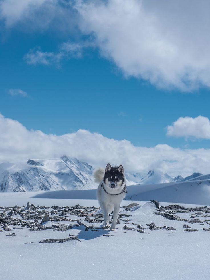 Ele deixou o emprego pra cair na estrada com seu husky e contar tudo em imagens…