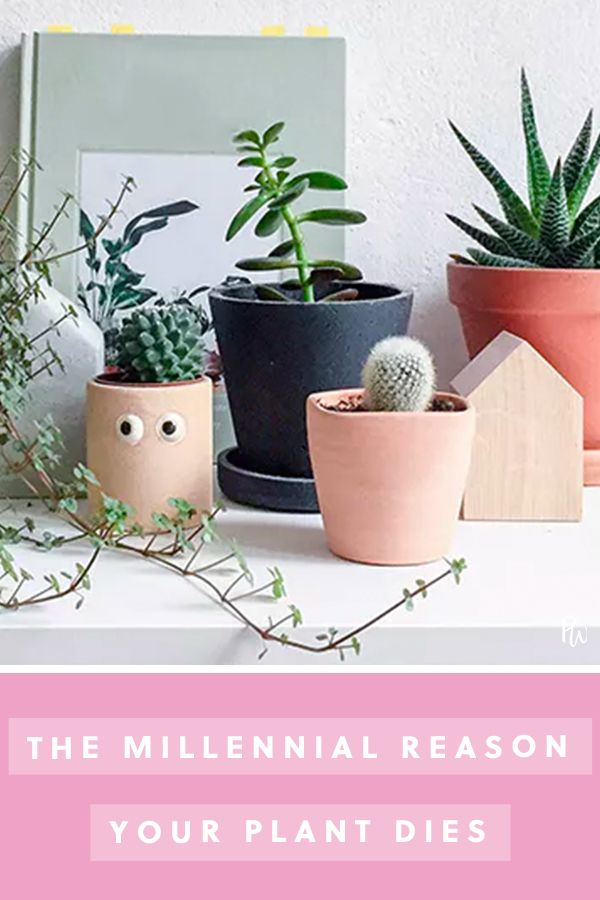 Millennial Reasons Your Plant Is Dead | Living room plants ... on dead plant cartoon, dead finger plant, dead angel plant, dead flower, dead gardenia plant, dead office plants, dead orchid plant, dischidia plant, dead horse plant, money tree plant, dead rose plant, dead cannabis plant, dead palm plant, dead fern, dead planet, a dead plant, healthy plant dead plant, dead potted plant, dead plants in pots, dead corpse plant,