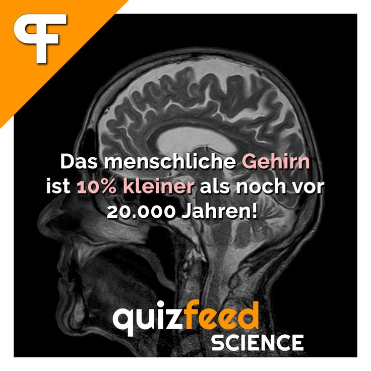 Das menschliche Gehirn ist 10% kleiner als noch vor 20.000 Jahren! Über die letzten 20.000 Jahre ist unser Gehirn von 1500 Kubikzentimeter auf 1350 Kubikzentimeter geschrumpft. Die Differenz von 150 Kubikzentimeter entspricht der Größe eines Tennisballs.