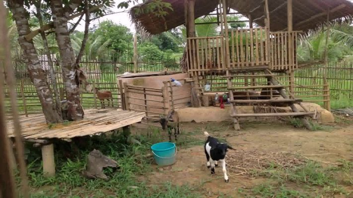 Goat House Design In The Philippines Goat House House Design