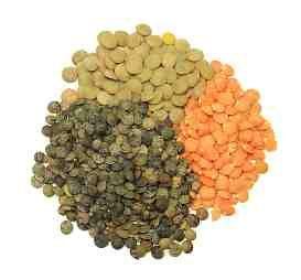 Cook's Thesaurus: Lentils
