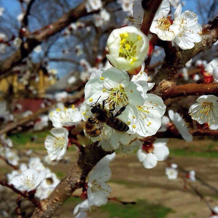 🌺А ты готов встречать весну?  #мед #пасека #натуральныйпродукт #пчелы #перга #пыльца