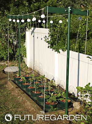 hydroponic cucumbers, hydroponic tomatos, hydroponic peppers