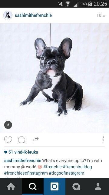 Franse bulldog (zwart/wit)  Zwart lederen halsband en riem