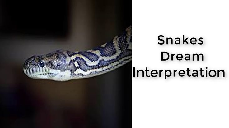 What is the meaning of snakes in a dream  |  Dreams Meaning and Interpretation