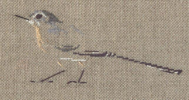 http://www.archive-host2.com/membres/images/1336321151/bestioles/oiseaux/bergeron/bergeronettedesruisseaux.jpg