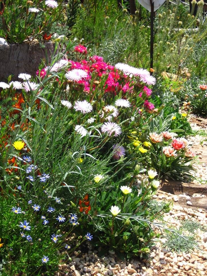 Fynbos and Indigenous Perennials and ground covers